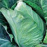 Cabbage Seed, Early Jersey Wakefield, Heirloom, Organic, NON GMO Seeds, Tasty Healthy Veggie - Country Creek LLC