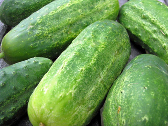 CUCUMBER SEEDS , BOSTON PICKLING CUCUMBER SEEDS , HEIRLOOM, ORGANIC NON-GMO SEEDS, GREAT FOR PICKLING - Country Creek LLC