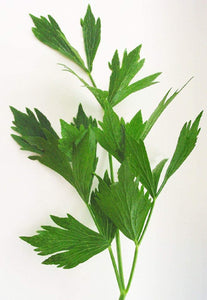 Lovage Herb Seeds -  Non-GMO - an herb That Tastes Like Celery, with Undertones of Parsley and a hint of Anise. - Country Creek LLC