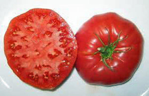 TOMATO, GIANT BELGIUM, HEIRLOOM, ORGANIC 100 SEEDS, DELICIOUS LARGE TASTY FRUIT - Country Creek LLC