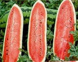 WATERMELON, JUBILEE , HEIRLOOM, ORGANIC 20 SEEDS, LARGE, SWEET N DELICIOUS - Country Creek LLC