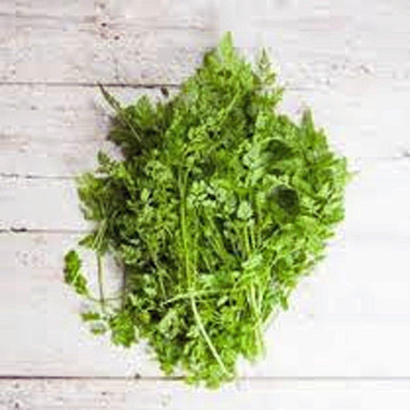 Chervil Seeds, Herb, NON GMO Seeds, Organic, Seeds ,  Use the herb fresh to flavor vinaigrettes. - Country Creek LLC