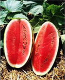 Seeds-Watermelon, KLECKLEY'S Sweet, Heirloom - Country Creek LLC