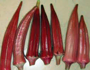 Okra Seed, Red Burgandy, Heirloom, Organic, Non Gmo, 25+ Seeds, Garden Okra Seed - Country Creek LLC