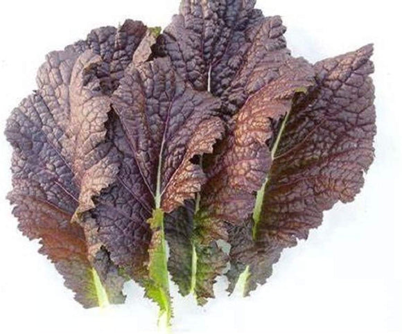 Red Giant Mustard Green Seeds  - Non-GMO - A Beautiful Mustard from Japan Well-savoyed Leaves, predominately Reddish-Purple with an Undercoat of deep Green. - Country Creek LLC