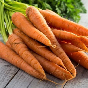 Tendersweet Carrot Seeds - Non-GMO - Rich-Orange Colored Roots are coreless, Crisp and Very Sweet. Perfect for Canning, juicing, or Eating raw. - Country Creek LLC