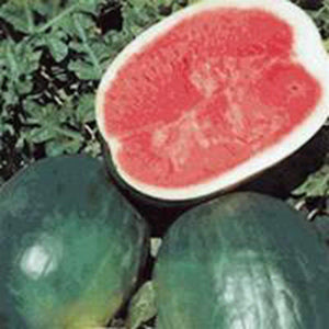 Watermelon Seed Garden Collection, Heirloom, Non Gmo, Organic Seeds, 6 Top Seeds - Country Creek LLC