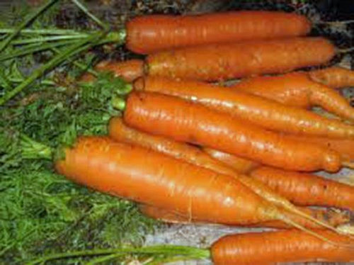 CARROTS, LITTLE FINGER, HEIRLOOM, ORGANIC 25+ SEEDS, DELICIOUS CARROT