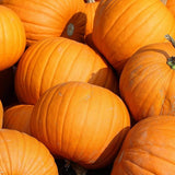 Spooky Pumpkin Seeds- Baking, Growing, non-GMO Seed, Home Garden - Country Creek LLC