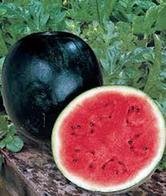 WATERMELON, SUGAR BABY , HEIRLOOM, ORGANIC 100 SEEDS, SMALL, SWEET N DELICIOUS - Country Creek LLC