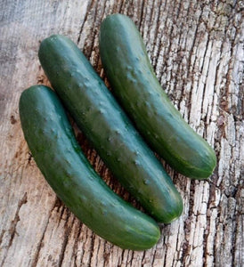 Marketmore 76 Cucumber Seeds - Non-GMO- The Most recognizable heirlooms and a Favorite Slicer for The Home Garden. - Country Creek LLC