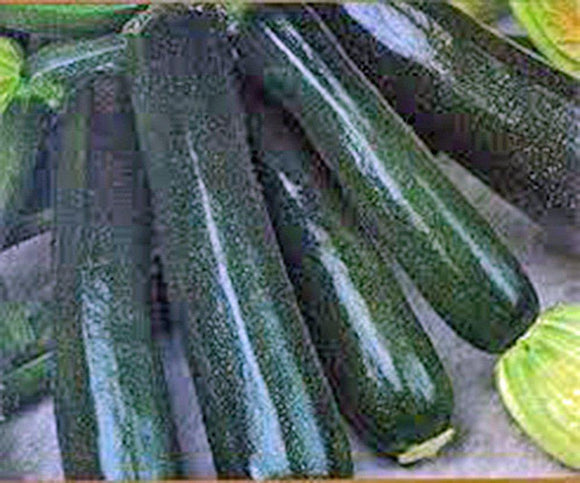 ZUCCHINI, SQUASH, BLACK BEAUTY, HEIRLOOM, ORGANIC, 100 SEEDS, DELICIOUS HEALTHY - Country Creek LLC