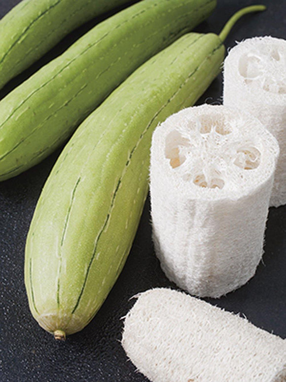 Gourd Luffa Seeds, Luffa Gourd Sponge Seeds, Organic , NON GMO, Grow your own Luffa Gourds and discover even more uses for this fascinating, porous fruit!. - Country Creek LLC