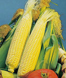 CORN, GOLDEN BEAUTY YELLOW CORN, HEIRLOOM, NON-GMO, ORGANIC SEEDS, DELICIOUS, GOLDEN AND SWEET - Country Creek LLC