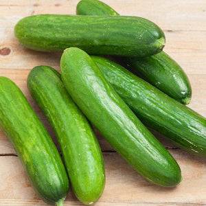 Spacemaster 80 Cucumber Seeds - Non-GMO - Produces Large Numbers of flavorful, Full-Sized Slicing Cucumbers Perfect for The Small Garden. - Country Creek LLC