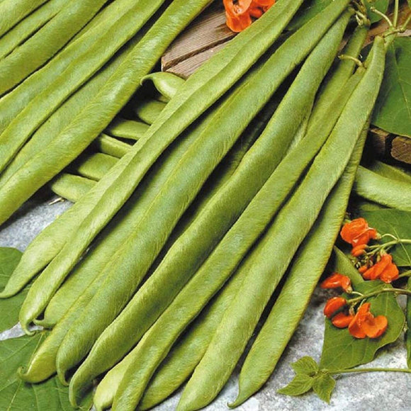 Runner Bean Seeds  Non-GMO - A Fast Growing Annual That is a Good Choice for Edible Landscaping. - Country Creek LLC