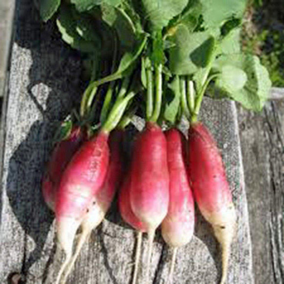 Root Vegetable Seed Garden Collection, Heirloom, Organic Seeds, 5 Top Varieties - Country Creek LLC