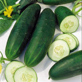 CUCUMBER SEEDS , STRAIGHT EIGHT CUCUMBER SEEDS, HEIRLOOM, ORGANIC, NON-GMO SEEDS, GREAT FOR SALADS/SNACK - Country Creek LLC
