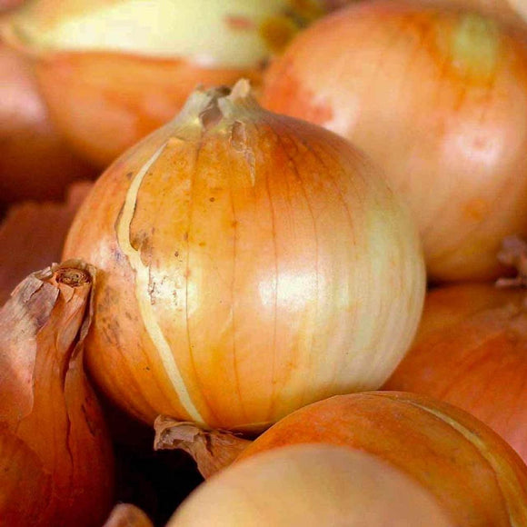 Whole Sweet Candy Onion -Country Creek Acres Brand- Sweet, Tasty, and Full of Nutrients!