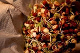 PEYTON'S PROTEIN MIX SEEDS FOR SPROUTING,COUNTRY CREEK LLC BRAND, MICROGREENS, ORGANIC, NON-GMO - Country Creek LLC