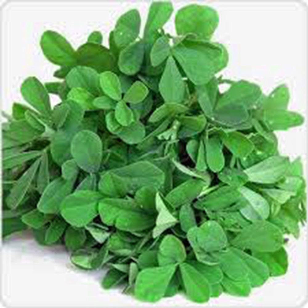 FENUGREEK, HERB SEED, HEIRLOOM, ORGANIC 20+ SEEDS, HEALTHY AND TASTY HERB
