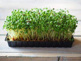 THE SALAD BAR MIX SEEDS FOR SPROUTING,COUNTRY CREEK LLC BRAND, MICROGREENS, ORGANIC, NON-GMO - Country Creek LLC