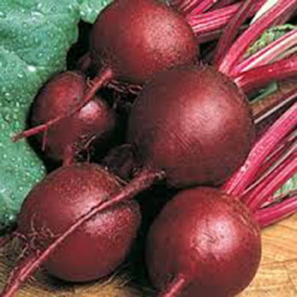 BEETS,RUBY QUEEN, HEIRLOOM, ORGANIC, NON GMO SEEDS, TENDER AND SWEET, DEEP RED - Country Creek LLC