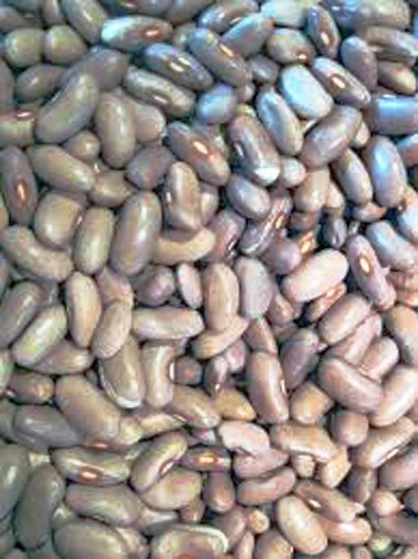 BEAN SEEDS , KENTUCKY WONDER POLE GREEN BEAN, HEIRLOOM, ORGANIC, NON GMO SEEDS, CLASSIC BEAN - Country Creek LLC