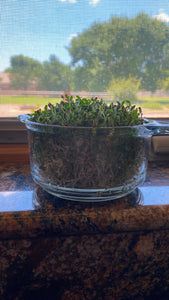 3 PART SALAD MIX SEEDS FOR SPROUTING,COUNTRY CREEK LLC BRAND, MICROGREENS, ORGANIC, NON-GMO - Country Creek LLC