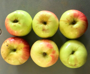 APPLES:  ZESTAR (1.5 lbs)