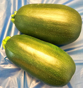 xx-NO MORE THIS SEASON-xx-SQUASH:  GREEN EGG ZUCCHINI (2)
