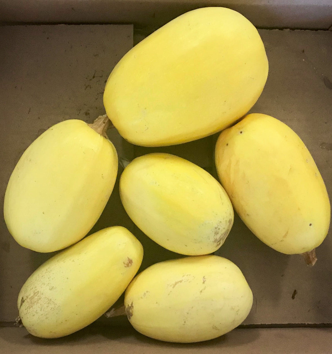 SPAGHETTI SQUASH (Assorted Sizes)