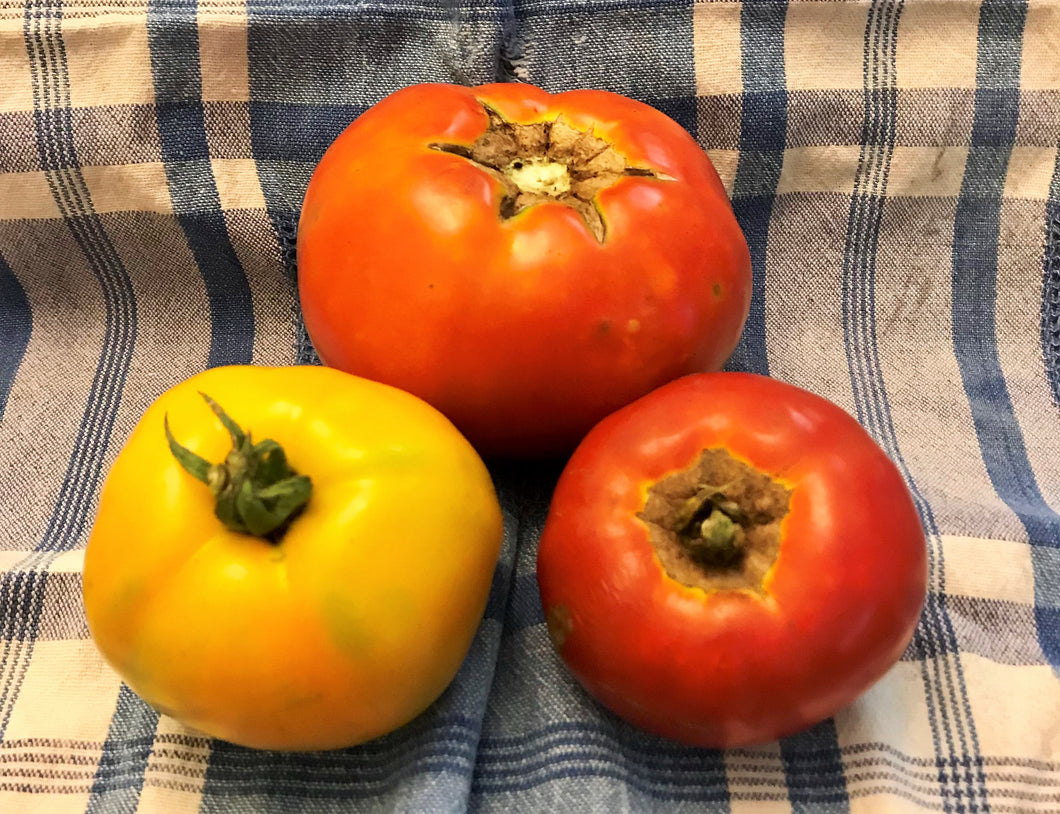 TOMATOES:  MIXED HEIRLOOM SLICING (1 LB)
