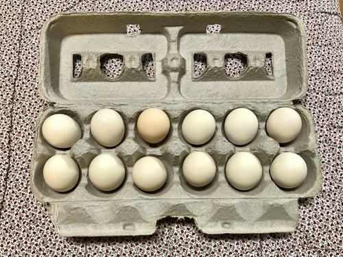 PASTURE RAISED CHICKEN EGGS:  BANTAM (PEEWEE)