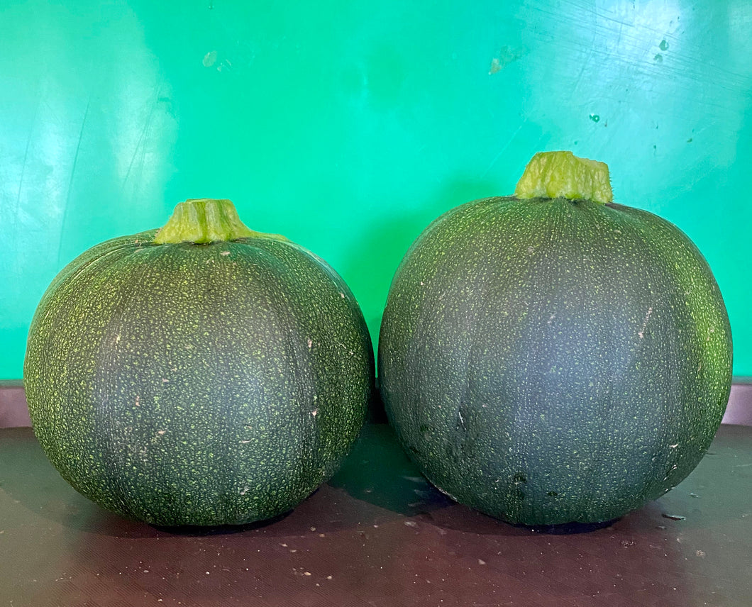 SQUASH:  XL EIGHT BALL ZUCCHINI (2)