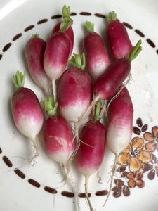 RADISHES:  (ADULT) FRENCH BREAKFAST (3oz)
