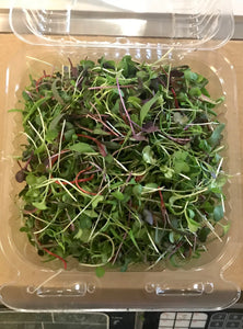 MICROGREENS:  Mixed, Cut (2 oz)