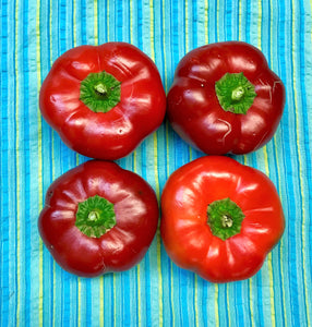 xx-NO MORE THIS SEASON-xx-PEPPERS:  SWEET HUNGARIAN CHEESE (3/4 LB)