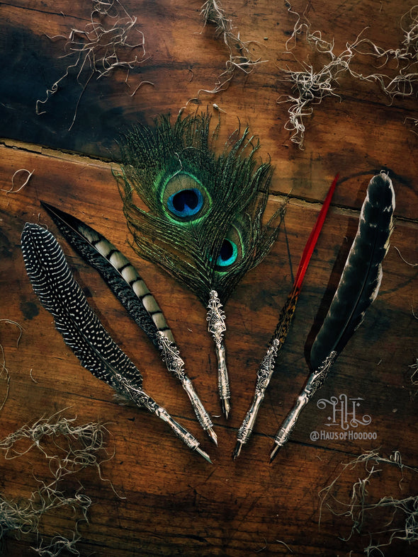 Feather Calligraphy Quill (Peacock)