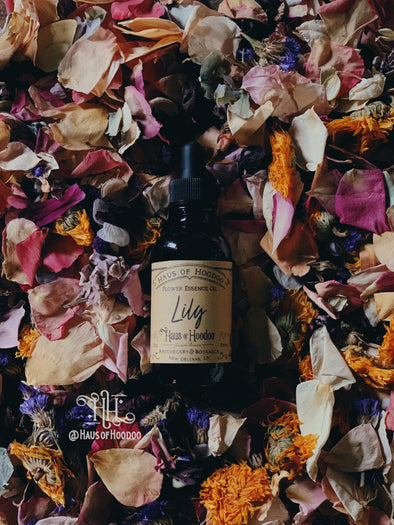 Lily Essence Oil