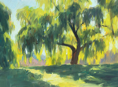 Willow in Morning Light - Original Oil Painting