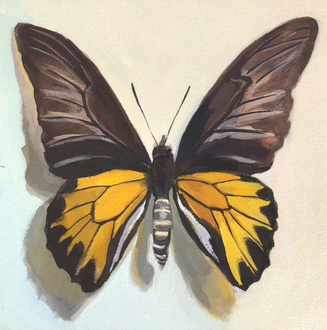 Golden Birdwing Butterfly - Original Gouache Painting