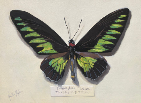 Green Butterfly - Original Gouache Painting