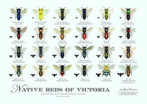 Australian native bee information and resources