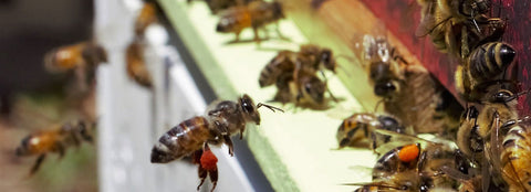 Australasian Honey Bee Research Conference scheduled for Perth, Western Australia in April 2021