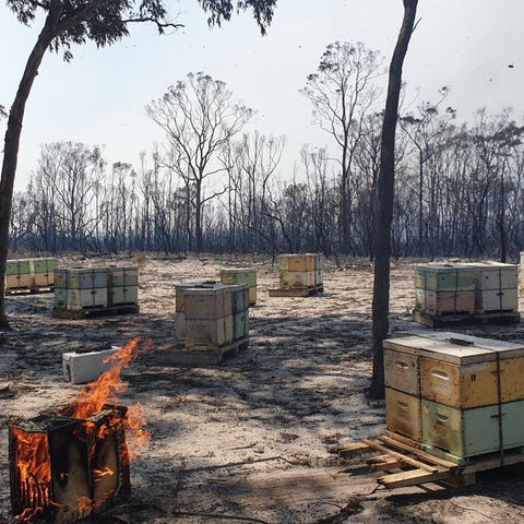 bee hives burnt in Australian bushfires