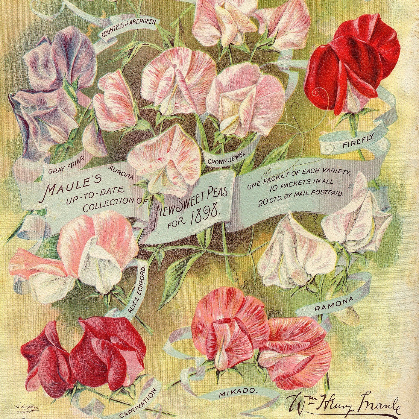 Puriri Lane | Maules Seed Catalogue | Vintage Sweet Peas