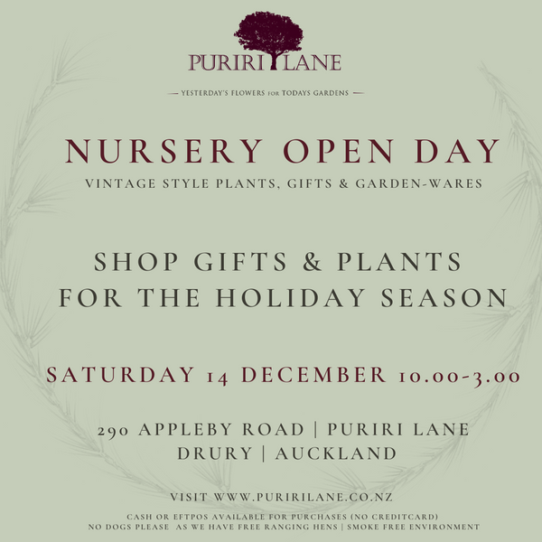 Puriri Lane | Holiday Season Open Day