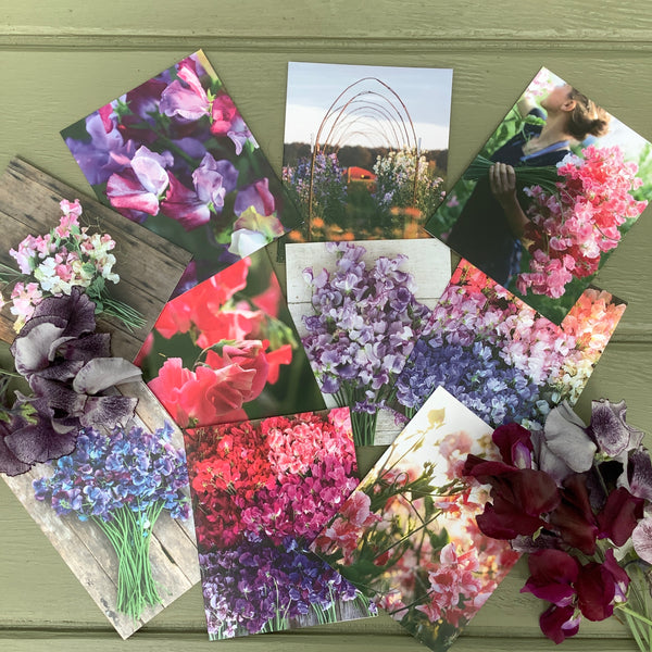 Puriri Lane | Floret Flower Farm's Sweetpea Note cards