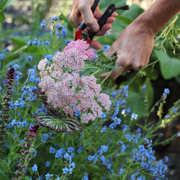 Achillea appleblossom and spring flowers